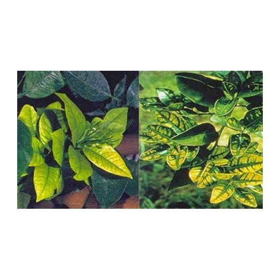 combo giải độc cho cây trồng