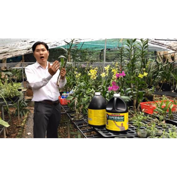 Khóa 22-Video Lớp học trồng...