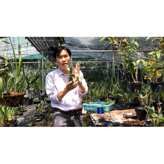 Khóa 7 -Video Lớp học trồng...