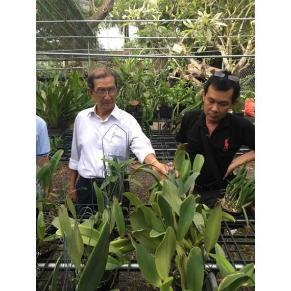 Lớp học trồng lan Chuyên Sâu